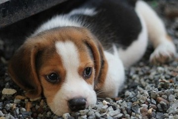 Popular Baby Names That Are Also Great Dog Names
