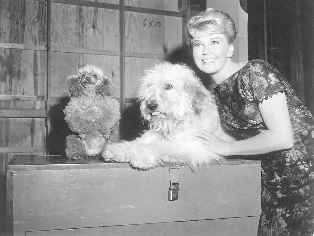 "Day with her mutt co-star Hobo and a toy poodle on the set of ""Please Don't Eat the Daisies"" (1960)."
