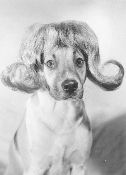 Canine Coiffure