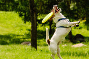 The Most Hilarious Dog Fails