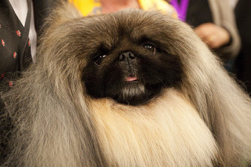 The Most Surprising (And Not So Surprising) Past Winners Of The Westminster Dog Show