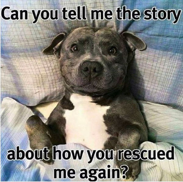 Amazing Rescue Dog Stories