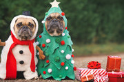 The Cutest Holiday Dog Costumes Ever