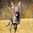The Worst Dog Breeds For Retirees