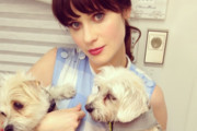 Celebrities Who've Adopted Rescue Dogs