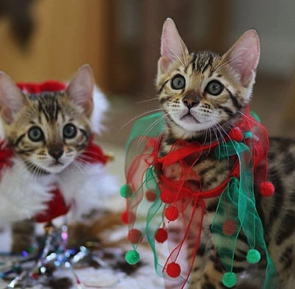 Tangled Up In Ribbons