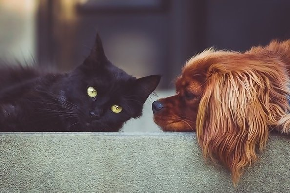 Tell Us Your Favorite Classic TV Characters, And We'll Reveal If You're A Dog Or Cat Person