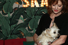 Celebrities And Their Adorable Pups