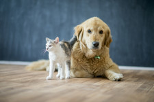Top Dog And Cat Breeds And Names For 2018