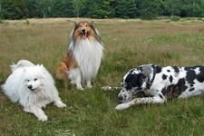 How Well Do You Know Dog Breeds?